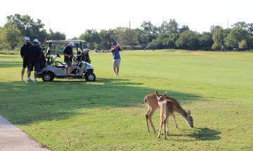 GNBEDF Golf 2020 (33)