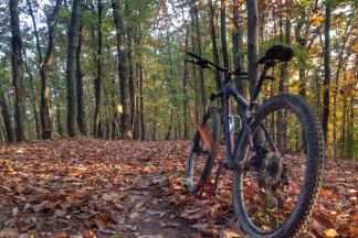 Easy MTB Trails