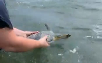 Sea Turtle Patient Release