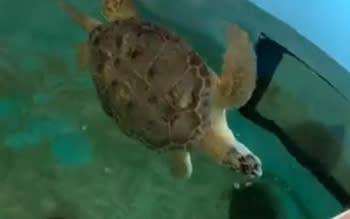 Fredd the turtle