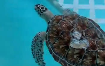 El Tigre! the turtle