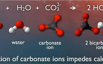 2020-ocean-acidification