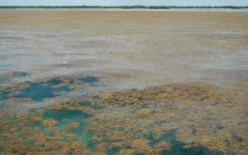2020-record-seaweed-belt