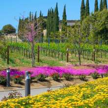 Spring Blooms at Callaway Winery