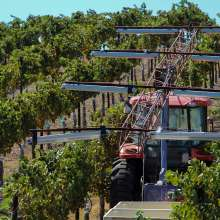 Harvesting Grapes in Temecula Valley (Day)