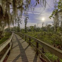Phinizy Swamp Boardwalk