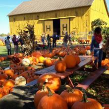 Pumpkins at Hilger's Family Farm