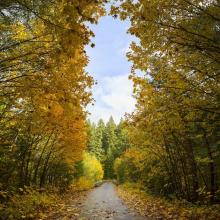 Aufderheide Scenic Byway in the Fall by David Putzier