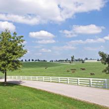 Scenic roadside in Lexington, KY