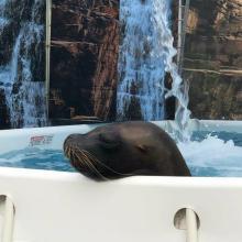 Sea Lions Make Splash at Topeka Zoo