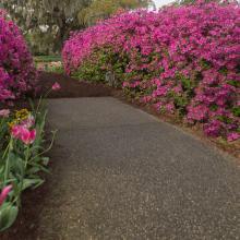 Airlie Gardens pathway
