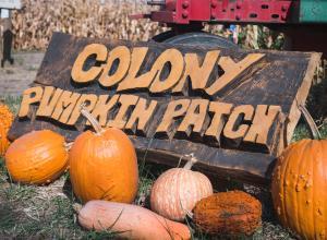 colony pumpkin patch