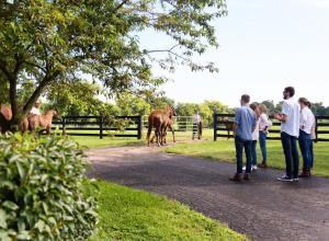 A group of people standing together watch horses being led into a fenced pasture.