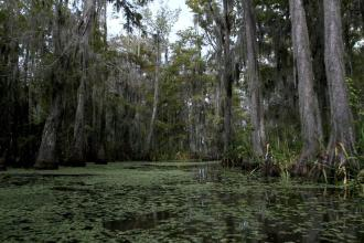 GO SWAMP: Louisiana's Northshore