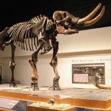 New York State Museum