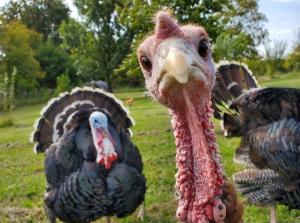Turkey at 5G Farm