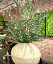 Plants from Viburnum Designs in Princeton, NJ.