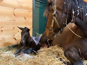 To the Moon Alice with Uncle Mo filly