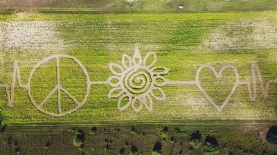 Gallagher's Sunflower Maze