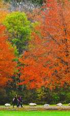 The Best Of Fall Scenery!