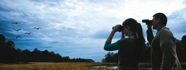 Birdwatching in Coastal Mississippi