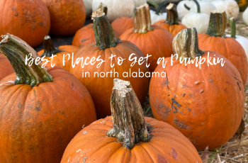 Best Places to Get a Pumpkin in North Alabama
