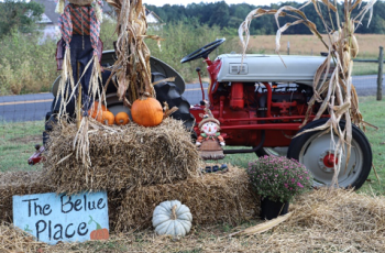 Find the Perfect Pumpkin at Belue Place Pumpkin Patch