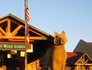 wolf lodge wolf statue