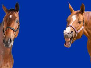 Laughing Horse Background Thumbail