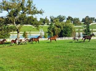 Horses at Donamire Farm