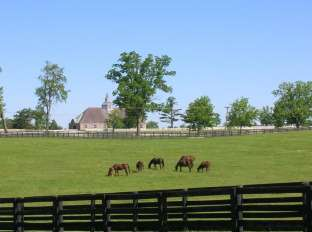 Mares and Foals Grazing