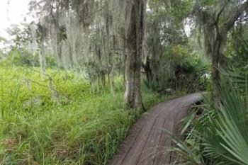 Barataria Preserve in Jefferson Parish
