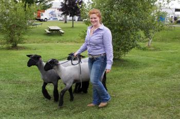 animals at Kenosha County Fair
