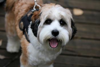 White fluffy dog on a leash in Juanita Bay