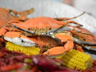 St  Tammany Crab Festival In Slidell LA | September 14 - 15, 2019