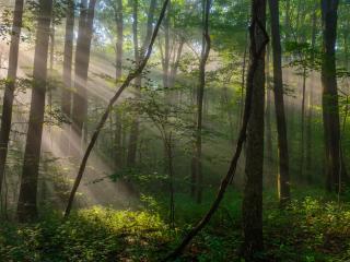 Clare Kaczmarek, Baughman Trail, Ohiopyle State Park