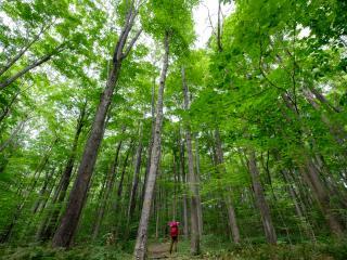 Gabriel Faria, Laurel Highlands Hiking Trail (2)