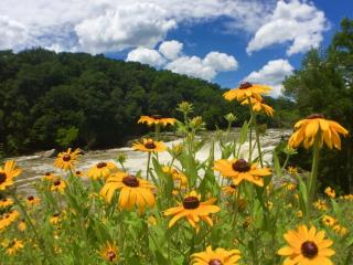 Ohiopyle Falls Flowers