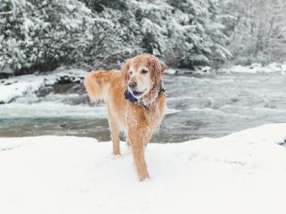 Ohiopyle Dog Winter
