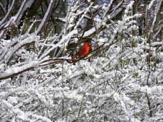 Ligonier Bird Winter