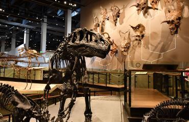 Natural History Museum of Utah Allosaurus