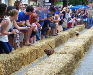 Weenie dog races - dogs running between hay bales