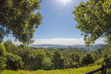 View of green trees and rolling hills at Roberts Regional Park