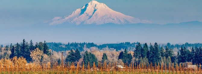 Mt. Hood view beyond the Lingua Franca vineyards on a clear day