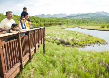 Wildlife viewing on the Potter Marsh boardwalk