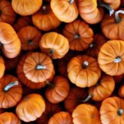Athens GA Pumpkins