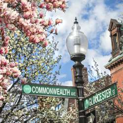 Back Bay Blooms - Commonwealth Ave