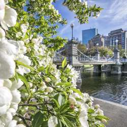 Public Garden Blooms & Bridge