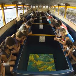Glass Bottom Boat Voyage