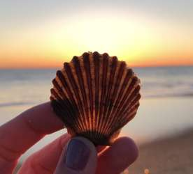 Seashell Beach Travel Persona Quiz